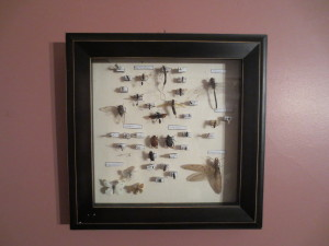 Entomology!