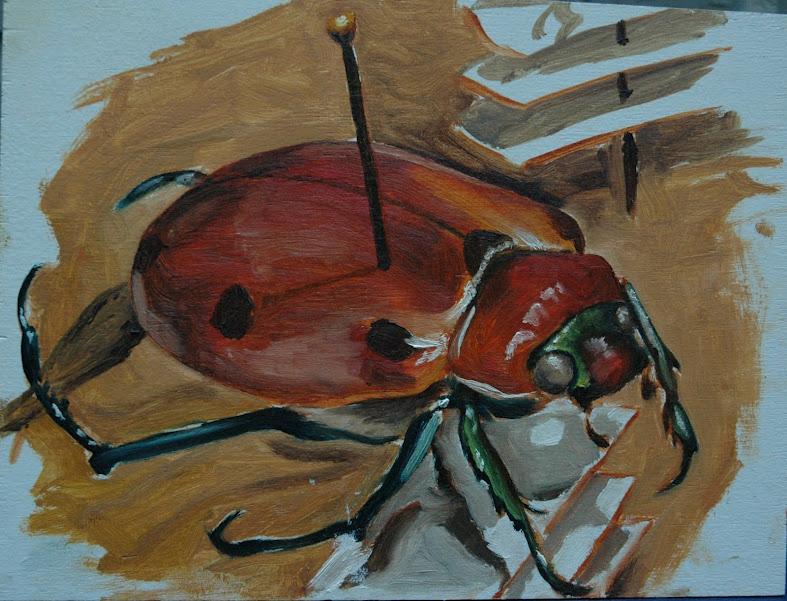 Enotomology! - Beetle