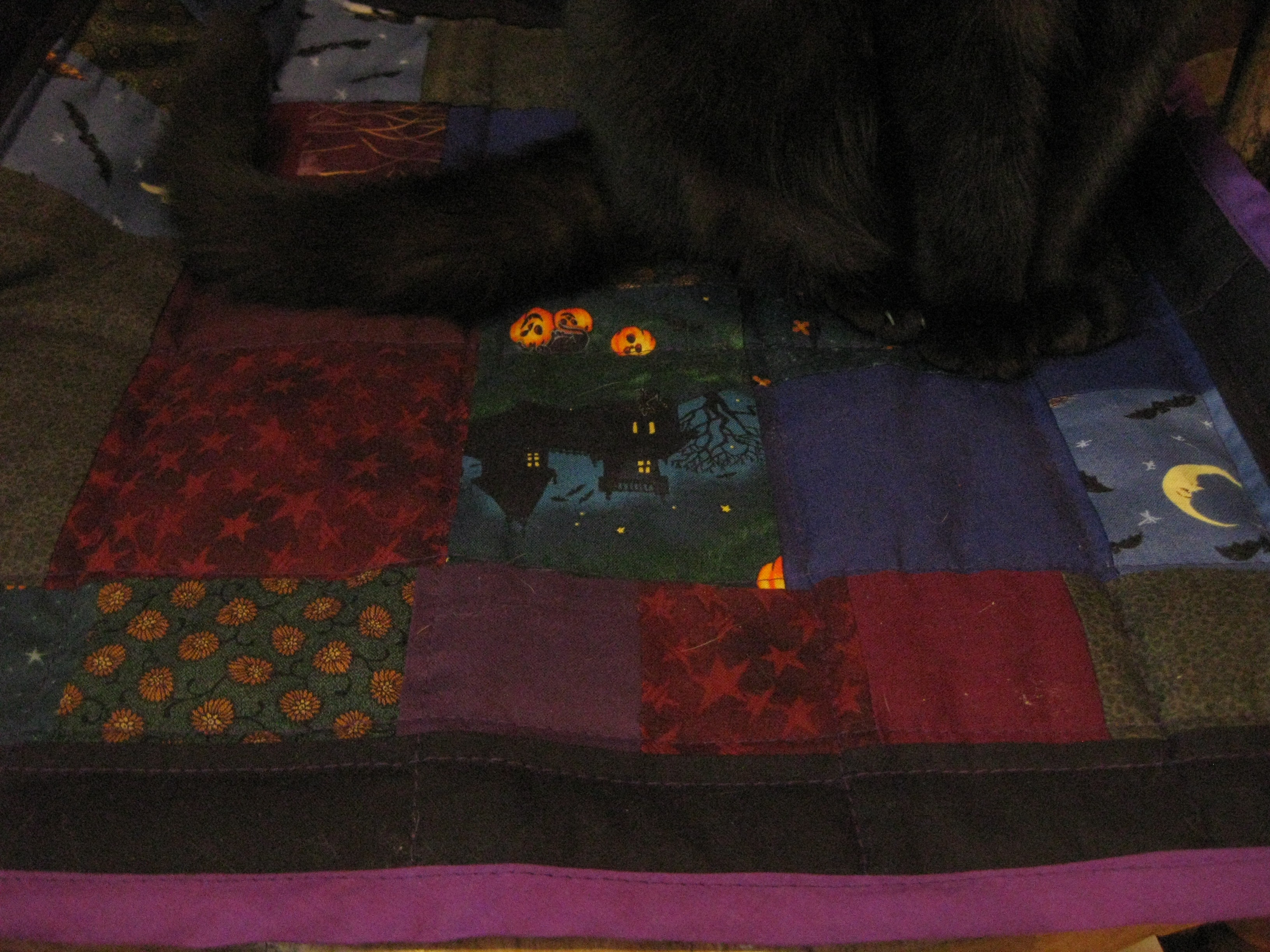 Paws and Quilt.